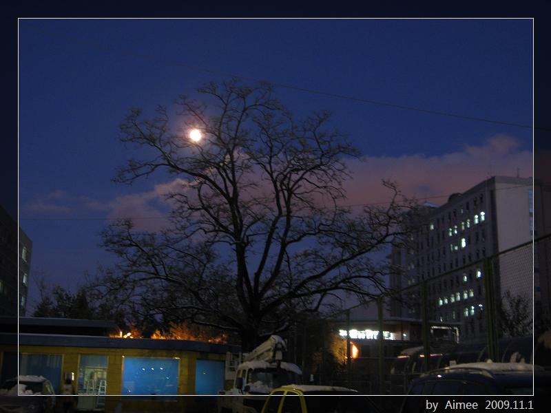 大榆树和月亮